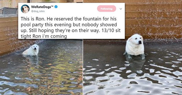 dogs tweets wholesome cute
