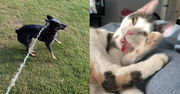 derp derpy cats dogs