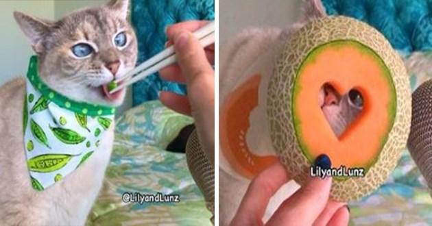asmr cat eating cute