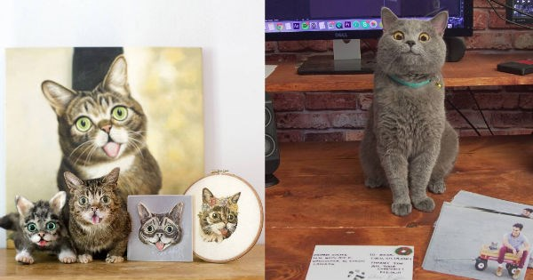 famous internet cats that became memes and recognized online