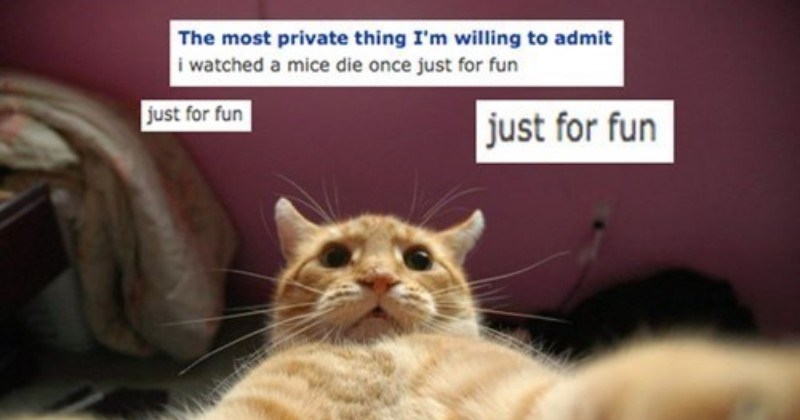 dating profile of a cat
