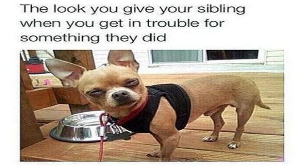 funny sibling meme