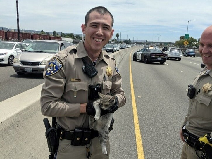 kitten rescue chp highway