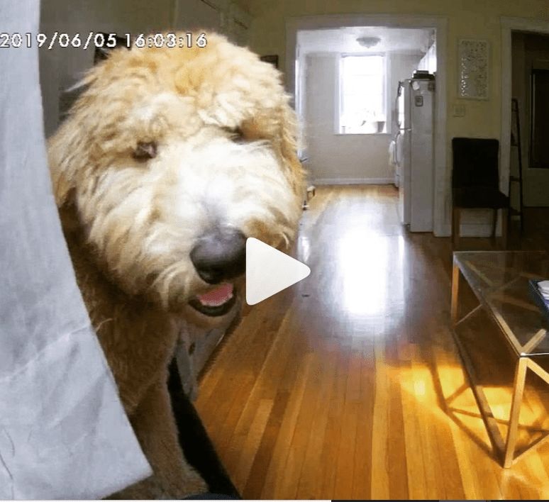Funny animals caught on camera