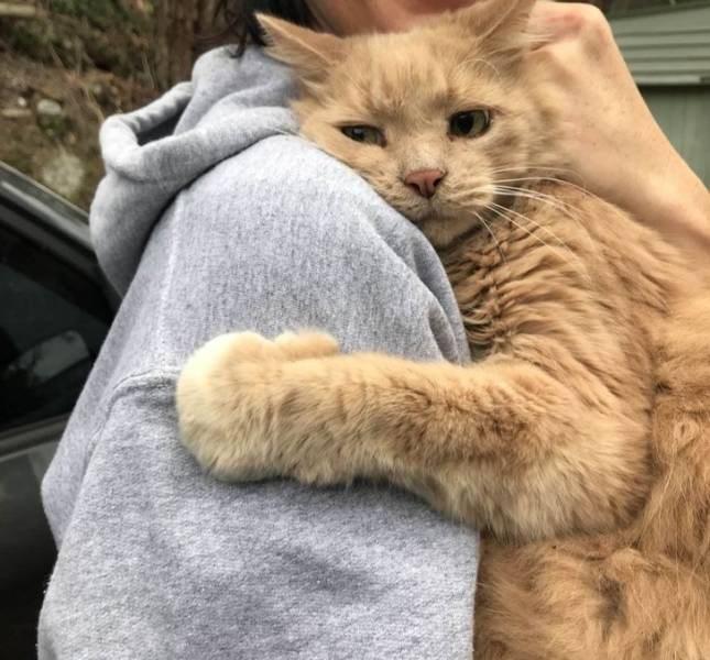 animals love happy cute