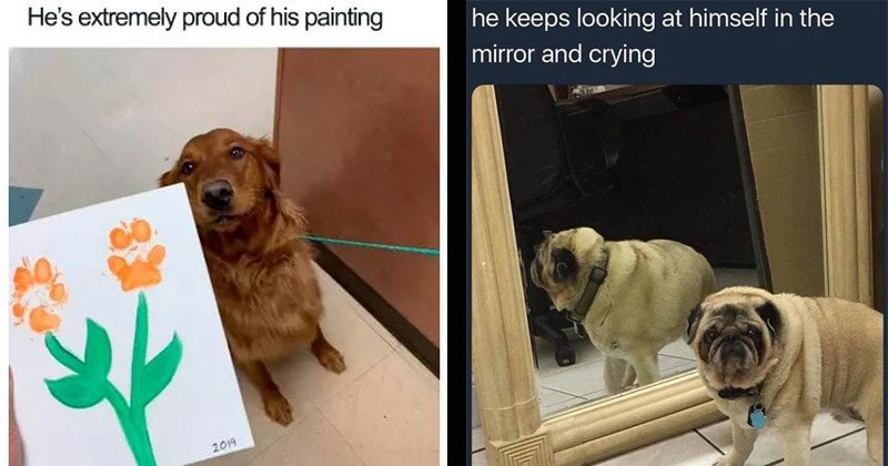 Funny memes about dogs