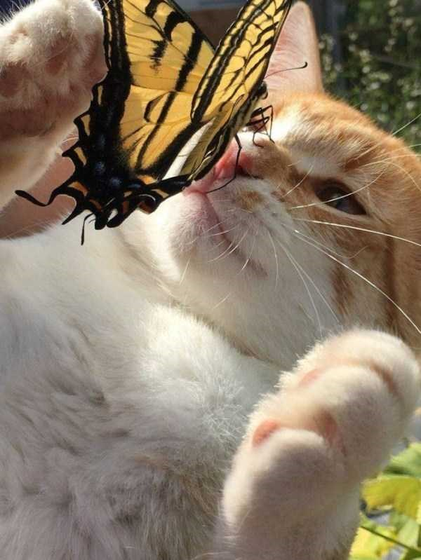 amazing animal photos, butterfly landing on a cat's nose