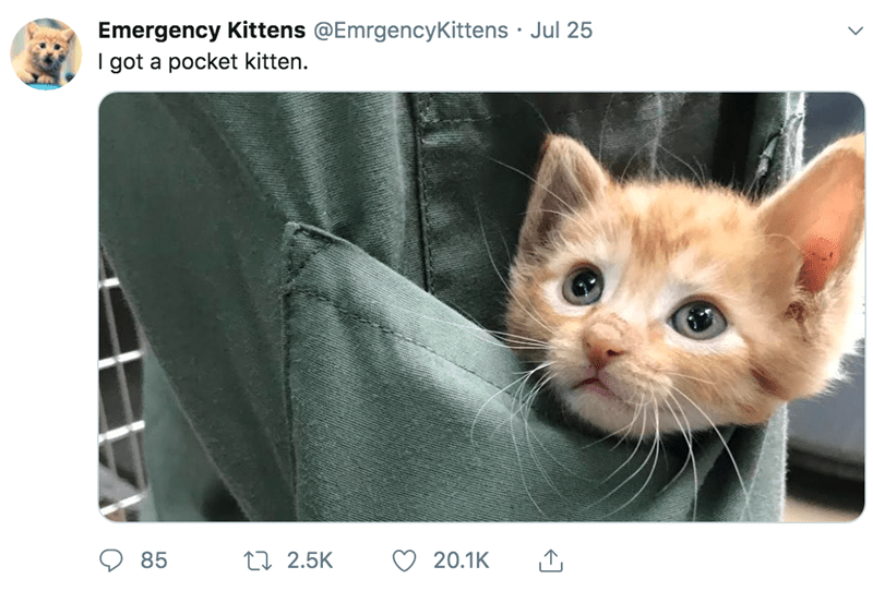 emergency kitten cute pics