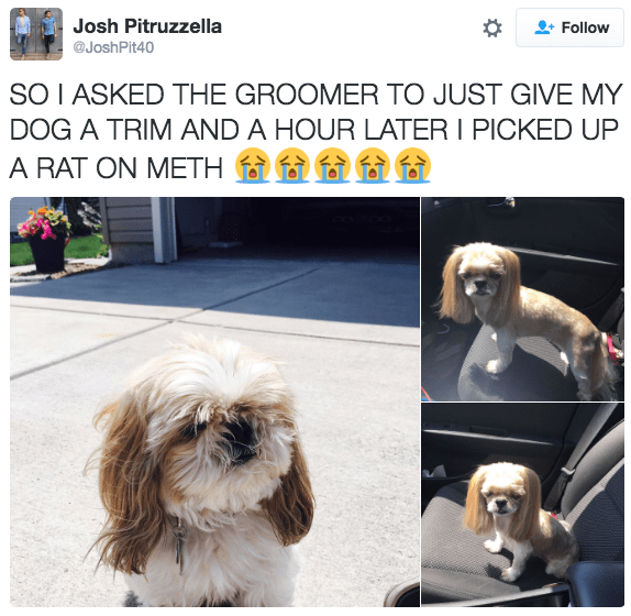 bad dog haircut