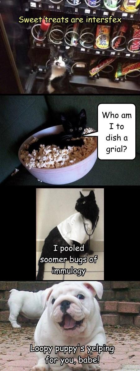 grial caption sylviag Cats dish eurythmics - 8922595328