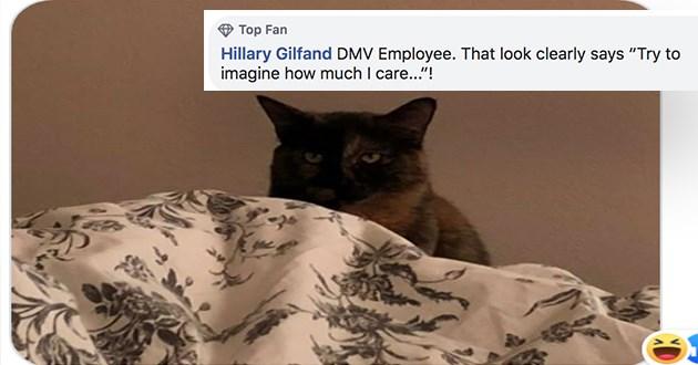 jobs profession cats funny