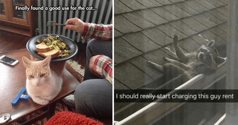 Funny animal pics, cute animal pics, dog pics, raccoon memes, dog memes, cute memes.