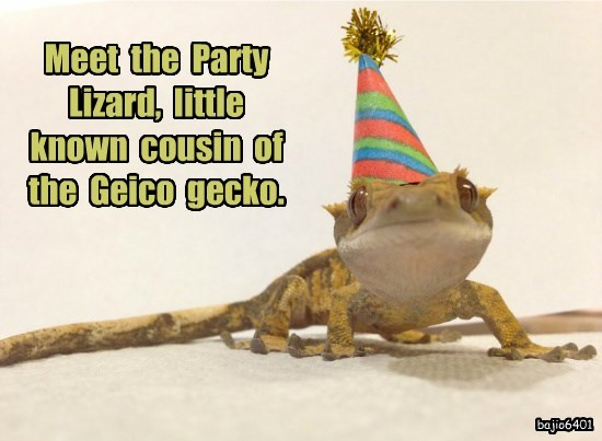 Meet  the  Party  Lizard,  little  known  cousin  of  the  Geico  gecko.