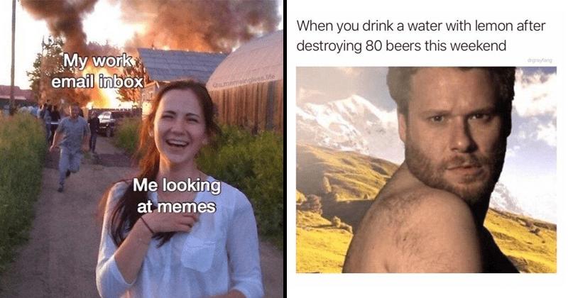 Funny memes, seth rogen memes, email memes, animal memes, work memes, seth rogen, beer memes, drinking memes.