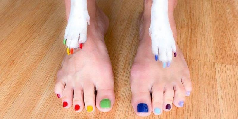 pawdicure pedicure manicure dogs