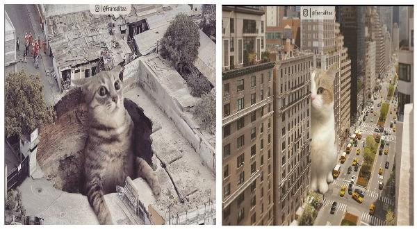 giant cat photoshop