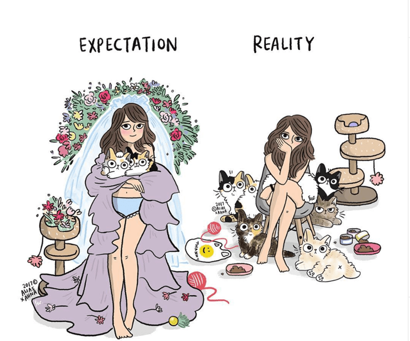 cat lady illustrations