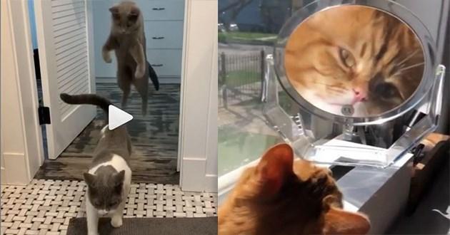 funny cats instagram videos
