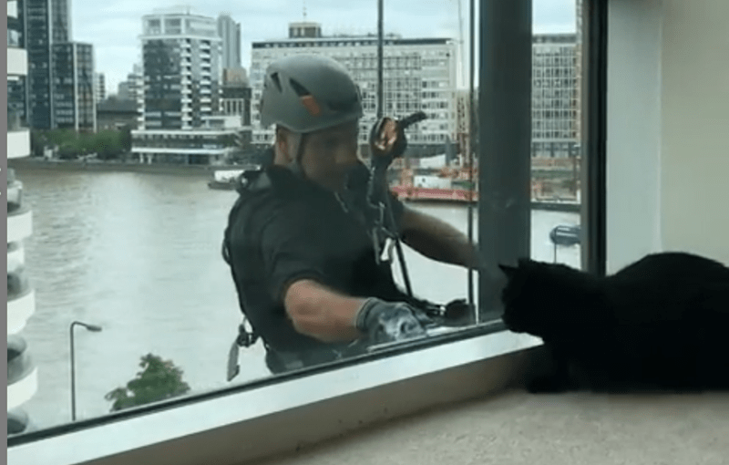 cat and a window cleaner