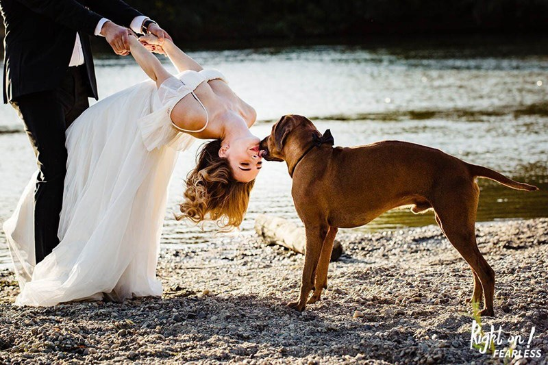 photography dogs wedding beautiful