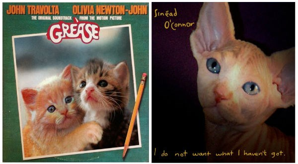cats on album covers