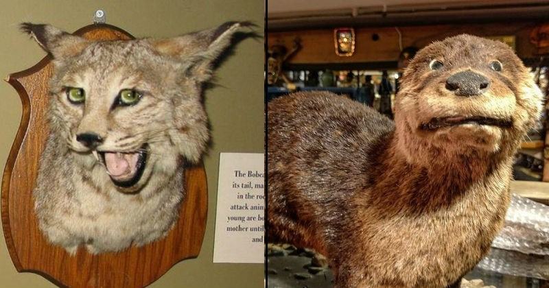 taxidermy fail, nightmare fuel, bad taxidermy