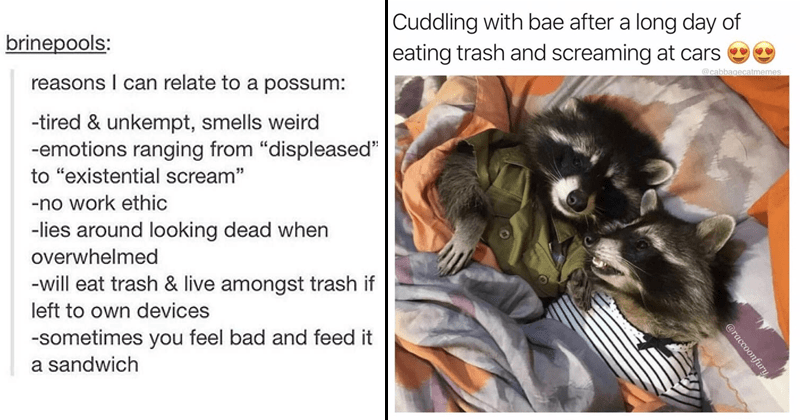Funny and relatable animal memes.