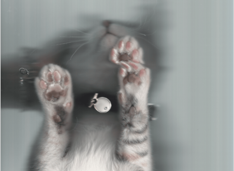 funny cats cat photos Cats scan - 8963589