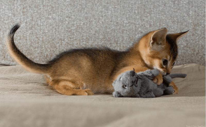 stuffed animal cute animals animals - 8964101