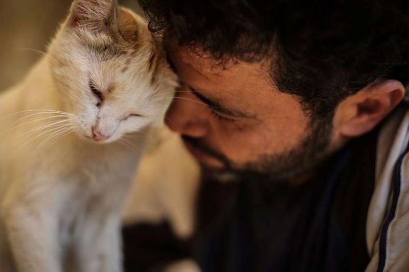 cats rescued aleppo syria by brave soul Mohammad Aljaleel to help deal with felines from the war