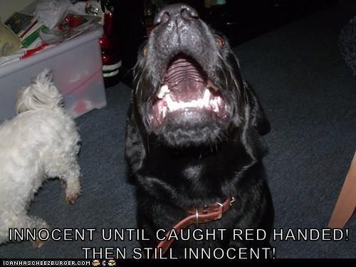 INNOCENT UNTIL CAUGHT RED HANDED!                                            THEN STILL INNOCENT!