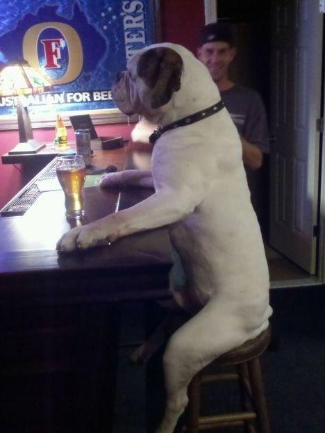 bar,dogs