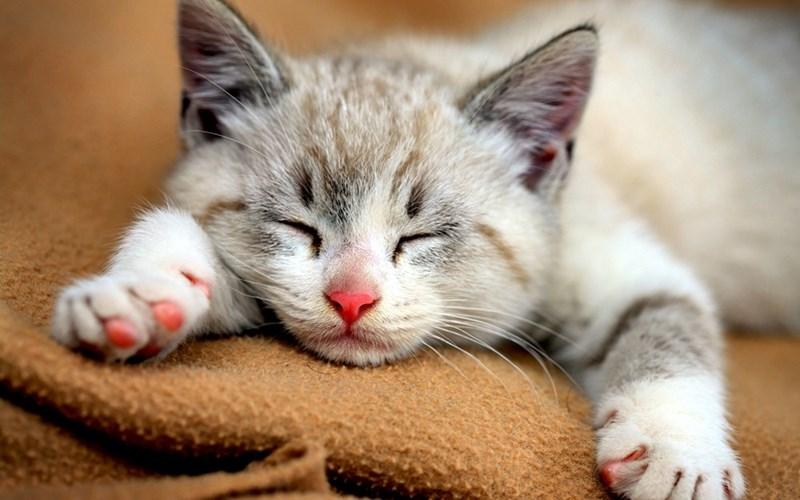 cute Cats - 8964642304