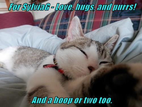 For SylviaG - Love, hugs, and purrs!     And a boop or two too.