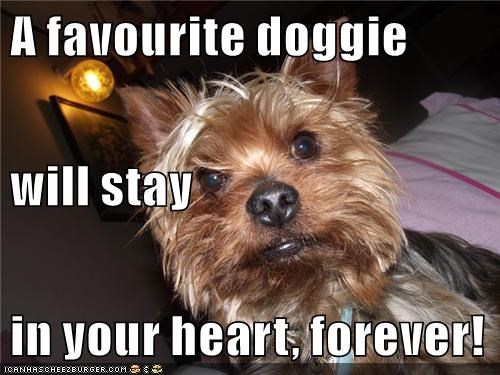 A favourite doggie will stay in your heart, forever!