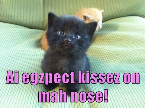 Ai egzpect kissez on mah nose!