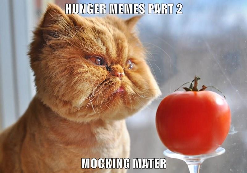 HUNGER MEMES PART 2  MOCKING MATER
