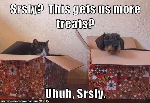 Srsly?  This gets us more treats?  Uhuh, Srsly.
