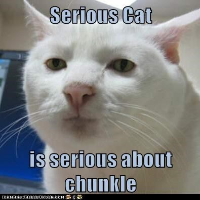 Serious Cat  is serious about chunkle