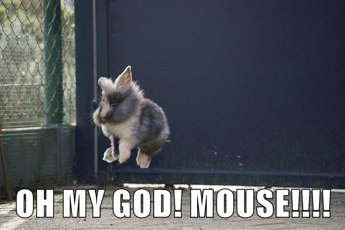 OH MY GOD! MOUSE!!!!
