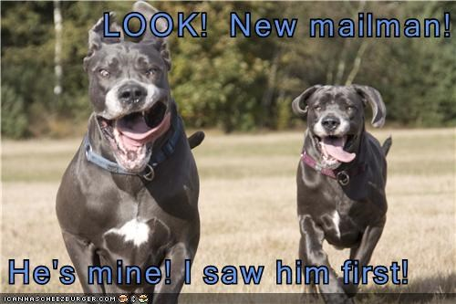 LOOK!  New mailman!  He's mine! I saw him first!