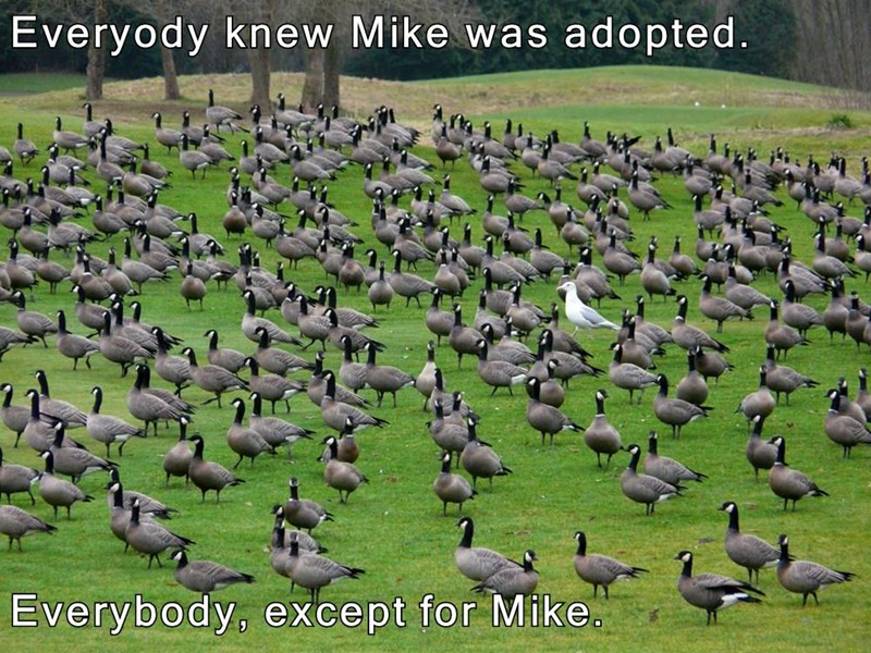 Everyody knew Mike was adopted.  Everybody, except for Mike.