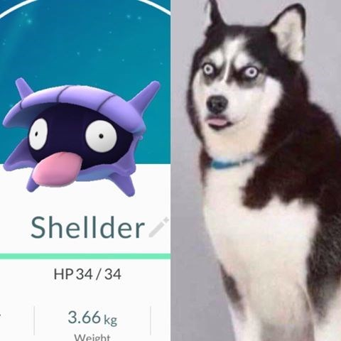 image pokemon go dogs Are You Two Related?