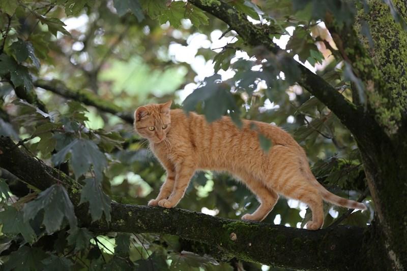 tree Cats - 8965166848