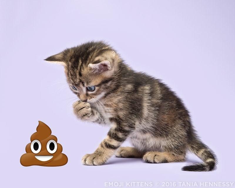 Cat - оо 2016 TANIA HENNESSY EMOJI KITTENS