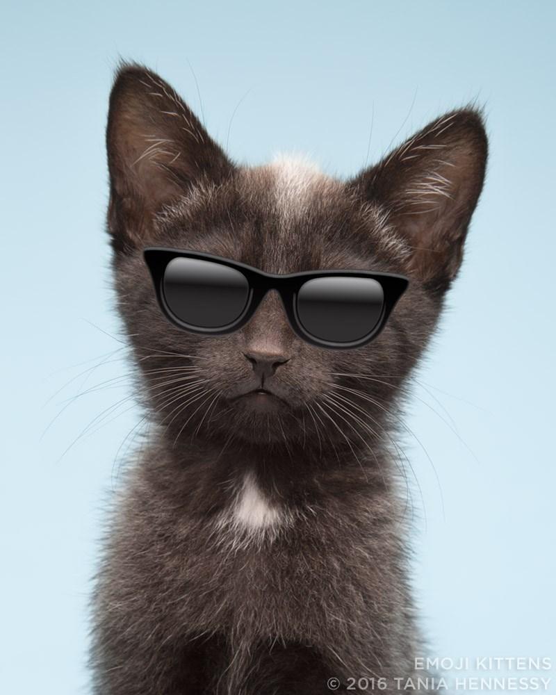 Cat - EMOJI KITTENS O 2016 TANIA HENNESSY