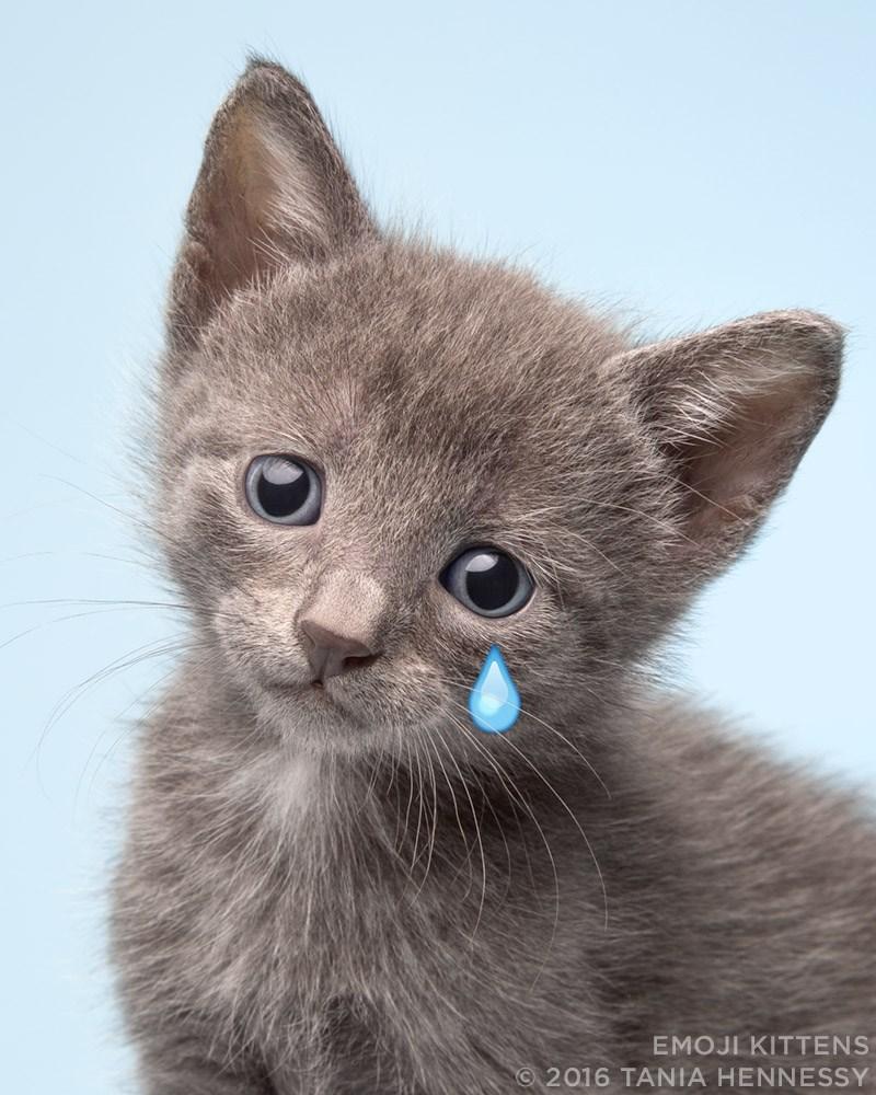 Cat - EMOJI KITTENS 2016 TANIA HENNESSY