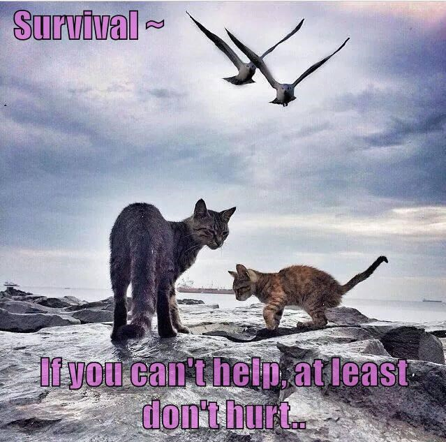 Survival ~  If you can't help, at least don't hurt..