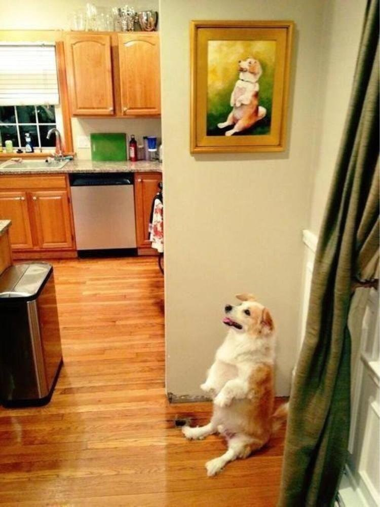life imitates art dog