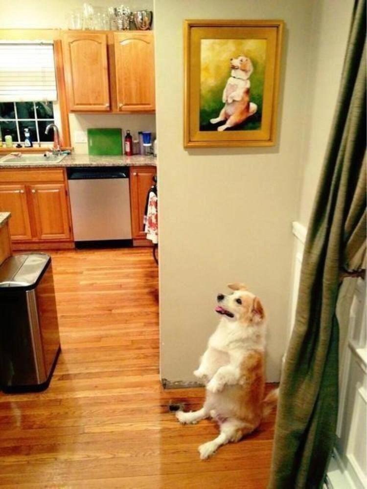 life imitates art dog
